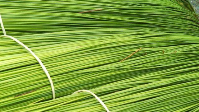 国産い草の特長